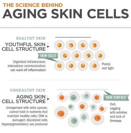 27360-120857-aging-skin-infographic-1.jpeg