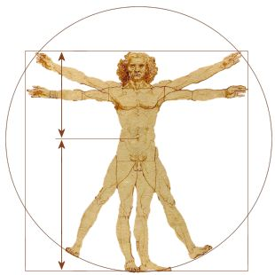 vitruvian-man-golden-ratio